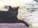 18-13 king cat