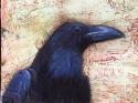 18-41 Raven